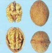 Sell seedlings varietal walnut